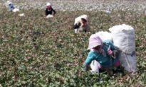 Hoa Kỳ cấm nhập khẩu các mặt hàng do lao động cưỡng bức từ Tân Cương