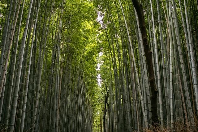 Chính vì rễ cắm sâu và rộng, nên khi đến thời kỳ thì nó sinh trưởng với tốc độ nhanh hơn bất kỳ loài thực vật nào.