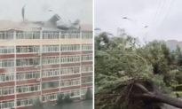 Bão Maysak đổ bộ vào Cát Lâm, thổi bay mái nhà, cây lớn bật gốc