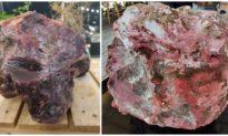 Lặn ngắm san hô, người dân Quảng Ngãi phát hiện 2 khối đá màu đỏ nghi là 'Long Diên Hương'