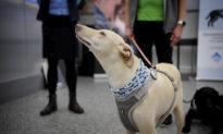 Chó đánh hơi virus Vũ Hán tại sân bay ở Phần Lan, phát hiện du khách bị nhiễm bệnh