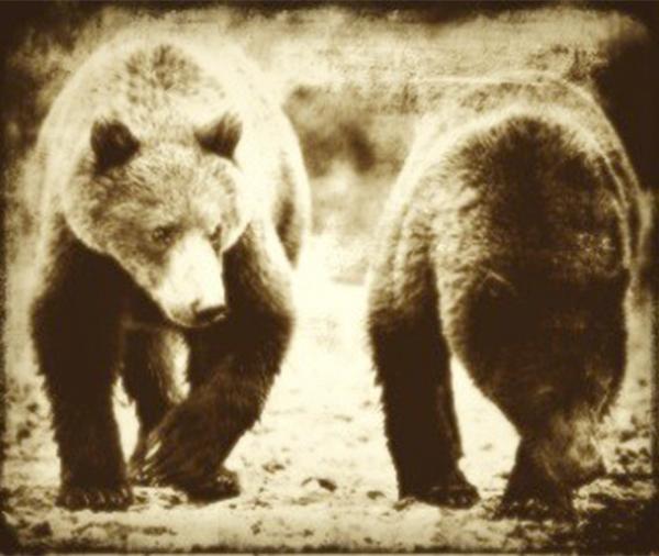 Nhà thám hiểm Zebulon Pike đã tặng Tổng thống Jefferson hai chú gấu xám mà ông bắt được ở miền Tây nước Mỹ.