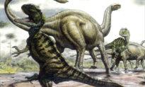 Phát hiện một Đại tuyệt chủng mới, 6 cuộc được xác địnhtrong 500 triệu năm qua