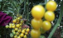 Hệ thống nông nghiệp sinh thái - Khi chúng ta sống mà không cần 'thuốc độc'