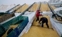 Khủng hoảng lương thực tái xuất sau 50 năm: Trung Quốc đang chìm sâu trong đó