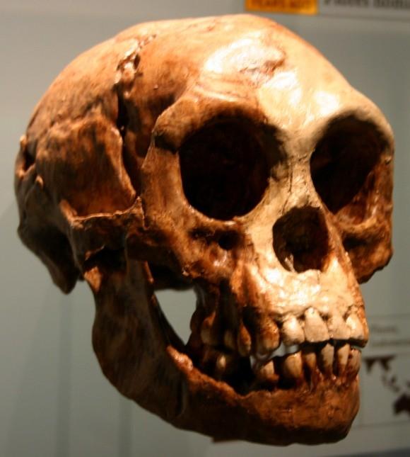 Xương sọ của chủng người lùn Homo Floresiensis (The Hobbit) được tìm thấy tại hòn đảo Flores ở Indonesia
