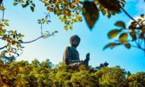 Phật gia giảng 'vạn vật có linh': là khoa học hay mê tín?