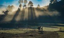 Ánh nắng mặt trời: Liệu pháp chữa bệnh và giải độc tự nhiên cho cơ thể