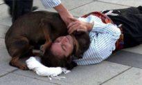 Một chú chó lao tới an ủi khi diễn viên nhập vai quá đạt cảnh bị trọng thương