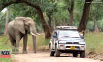 Bị bắn trúng đầu, chú voi hoang dã chạy đi tìm… bác sĩ