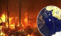 Chú mèo tưởng đã chết trong trận cháy đã được tìm thấy trên Facebook 2 năm sau đó