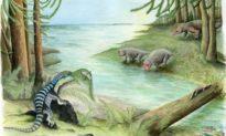 Phát hiện hóa thạch động vật 250 triệu năm tuổi tại Nam Cực: lịch sử Nam Cực cần phải viết lại?