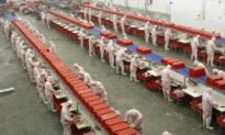 Đằng sau 'phép màu thịt lợn' của Trung Quốc: Công nghệ đang chuyển đổi nghề nuôi lợn và mang đến hậu quả khôn lường