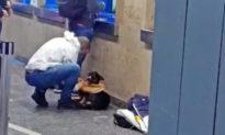 Hành động nhỏ, nghĩa cử lớn: Cởi áo đang mặc để ủ ấm cho chú chó lang thang đói lạnh