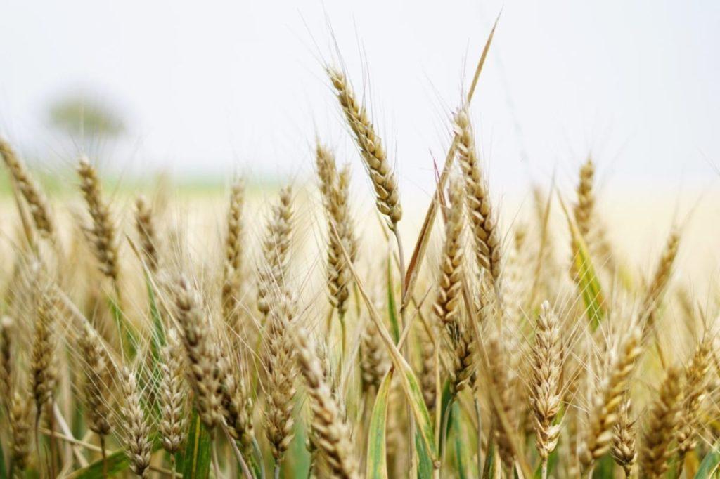 An ninh lương thực nguy khốn: Giá lương thực toàn cầu tăng khi nạn đói gia tăng