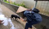 Thủy Tiên đi cứu trợ miền Trung: không chỉ thương người mà còn thương cả con vật