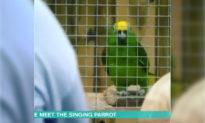 5 con vẹt bị 'đuổi việc' vì liên tục 'văng tục' trước mặt du khách
