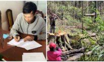Bắt giữ 3 nghi can triệt hạ rừng bạch tùng hàng trăm năm tuổi ở Lâm Đồng