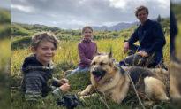 Chú chó sống sót sau khi dũng cảm bảo vệ gia đình khỏi gấu đen ở Alaska