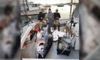 Ngư dân tuổi teen bắt được cá ngừ vây xanh 'quái vật' dài 3 m, nặng 454 kg