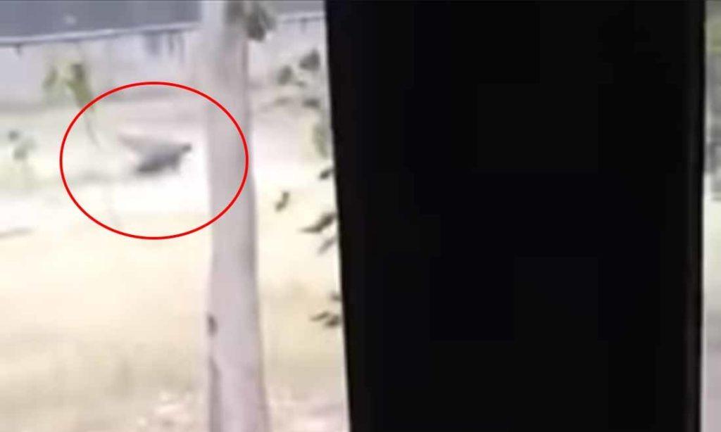 Video: Du khách kinh hoàng chứng kiến kẻ đột nhập bị sư tử tấn công
