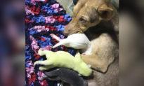 Hiện tượng hy hữu: chú chó quý hiếm với bộ lông màu xanh lá cây được sinh ra ở Philippines