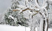 Cát Lâm Trung Quốc: Cây cỏ đóng băng là dấu hiệu báo trước đại sự gì?