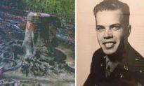 """Xác phi công """"mất tích"""" trong Thế chiến 2 được tìm thấy dưới gốc cây"""