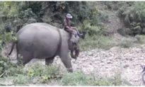 Con voi cuối cùng ở Bắc Tây Nguyên đã chết khi vừa tròn 50 tuổi