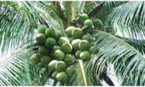 Một chủ vườn dừa ở Bà Rịa - Vũng Tàu bị bắt cóc, tống tiền 4 tỷ đồng