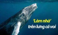 Đoàn Thị Lam Luyến: 'Làm nhà' trên lưng cá voi