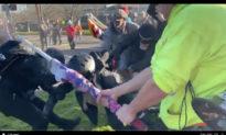 Video: Những kẻ bạo loạn Antifa hèn nhát thoái lui trước những người Mỹ yêu nước ủng hộ TT Trump