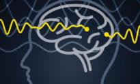 Phát hiện một cơ chế giao tiếp thần kinh mới trong não người