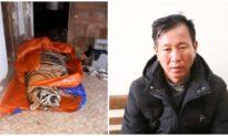 Phát hiện cá thể hổ nặng 250 kg trong nhà dân ở Hà Tĩnh, nghi bị chích điện