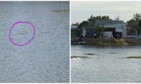Phát hiện vật thể nghi cá sấu nặng gần 100 kg bơi giữa hồ nước ở Vũng Tàu