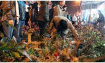 Nam Định dừng tổ chức phiên chợ Viềng đầu năm 2021