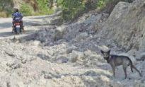 Chó chặn đường và sủa không ngừng, dẫn người đàn ông đến bãi rác và bất ngờ với đứa trẻ bị vứt bỏ