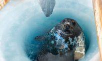 Nam Cực: Khám phá âm thanh kỳ lạ, bí ẩn, của thế giới khác dưới lớp băng giá