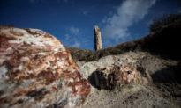 Các nhà khoa học ở Hy Lạp tìm thấy cây hóa thạch 20 triệu năm tuổi