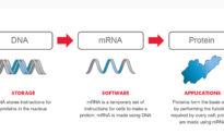 Moderna: Vaccine COVID-19 được thiết kế để lập trình lại gen người