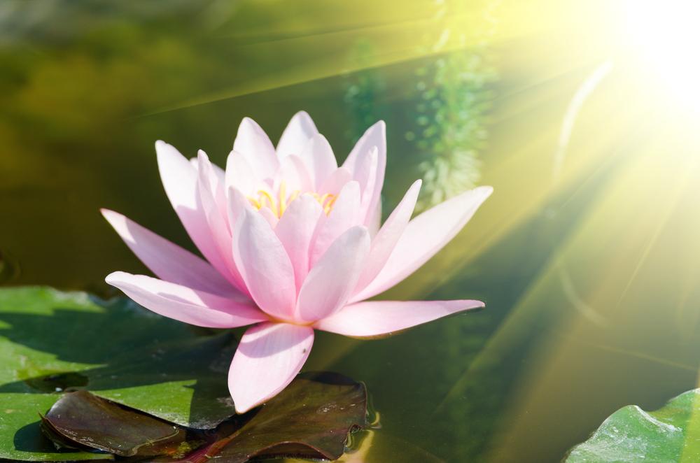 Thiên Đạo vô thân, có thiện tâm thì có thiện báo