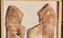 """Một số trường hợp văn minh thời tiền sử được đề cập trong """"Chuyển Pháp Luân"""" (P-1): Hóa thạch dấu chân có bọ ba thùy"""