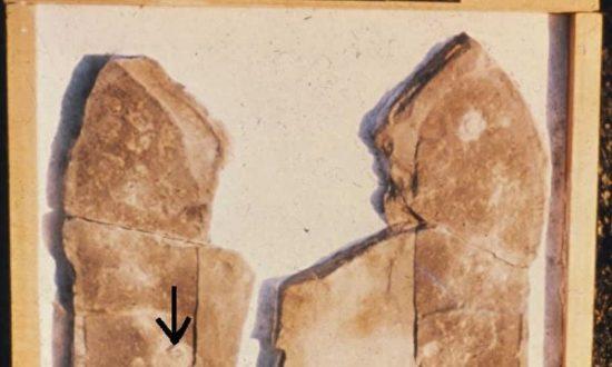 Hóa thạch dấu chân bọ ba thùy (Minghui.org)