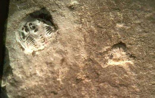 Chi tiết về loài bọ ba thủy trên đế giày (Minghui.org)