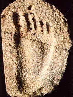 Hóa thạch của dấu chân trẻ em đi chân trần (Minghui.org)