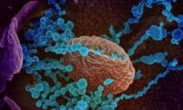 Mối lo ngại về đột biến của virus Vũ Hán trong các bệnh nhiễm trùng mãn tính, nghiên cứu mới