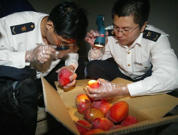 Nông dân Trung Quốc thường phun thuốc để chăm sóc và bảo vệ hoa quả, dẫn đến một lượng lớn chất độc hại sẽ tồn đọng trong cây trái.