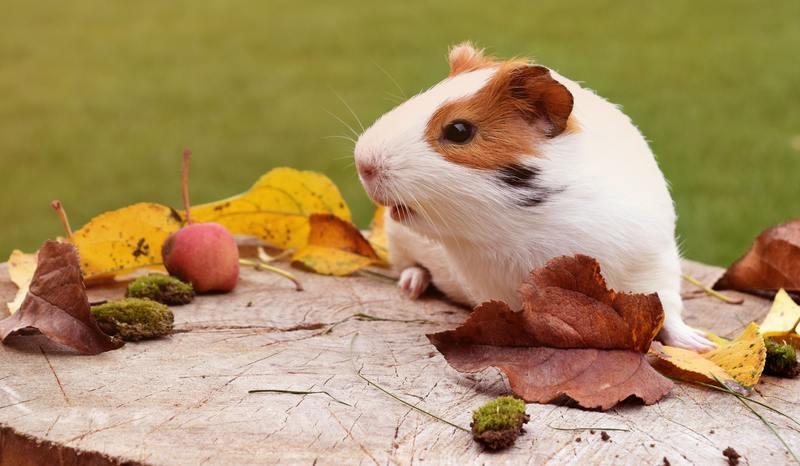 Mỗi lần tôi xuất hiện trước mặt mọi người, họ đều kêu lên: 'Chà, con chuột này to quá', mà xưa nay có ai nói: 'Chà, con trâu này to quá đâu?