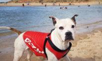 Chú chó mặc áo phao lao tới cứu cậu bé chết đuối trên sông ở Úc, đưa cậu về bờ an toàn