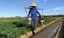 Lại phát hiện thêm 1 phụ nữ làm nông nghiệp nghi nhiễm COVID-19 ở Hải Dương
